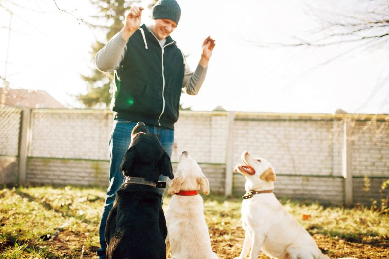 how to pick a dog trainer
