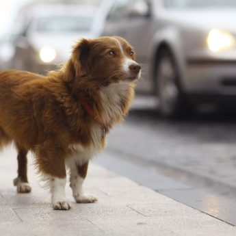 Keep your dog from running away