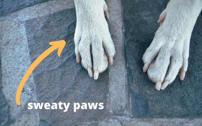 sweaty paws