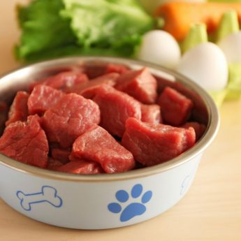 raw dog foods