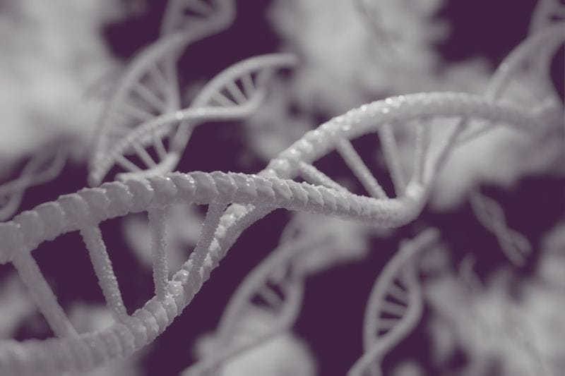 harlequin dog genes