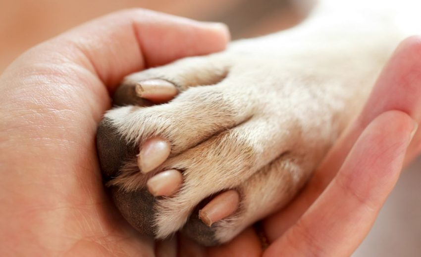 Dogs with Webbed Paws
