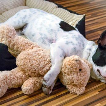 dog sleeping position explanation