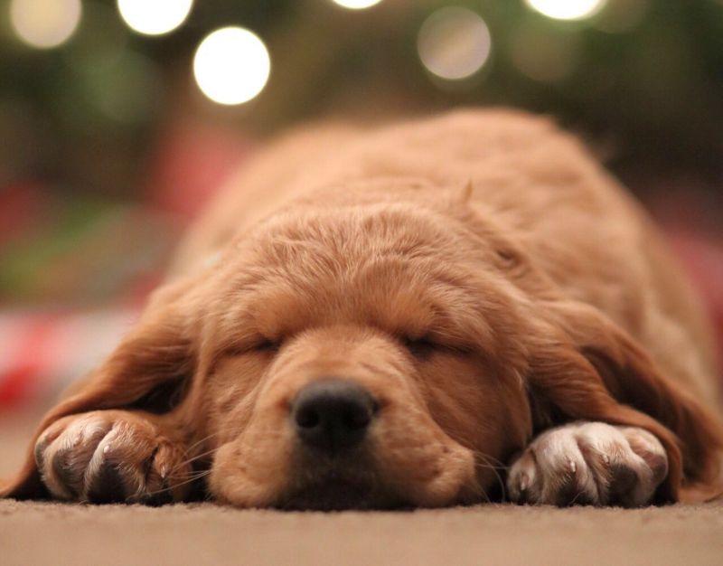 Many dogs sleep on their stomachs