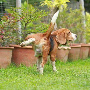 Dog pee is killing lawn