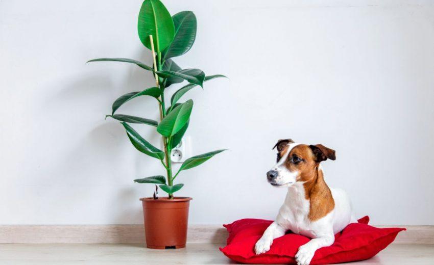 Environmentally friendly dog beds