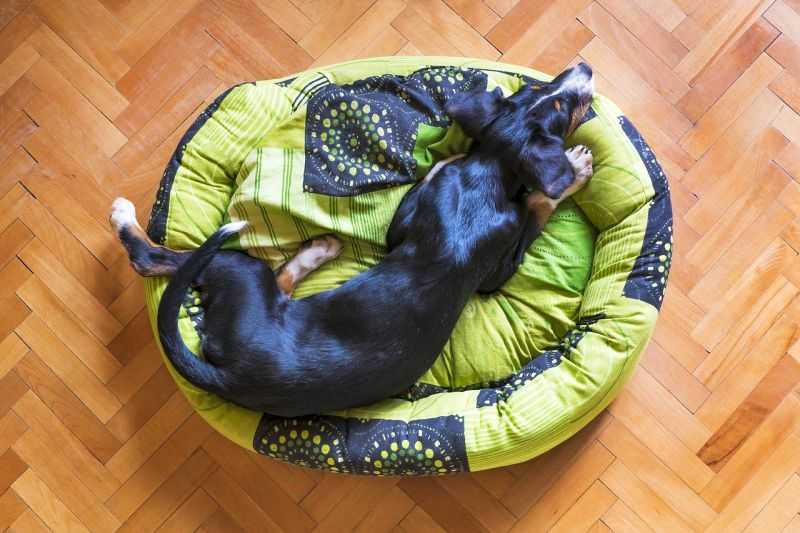 dog beds with recycled materials