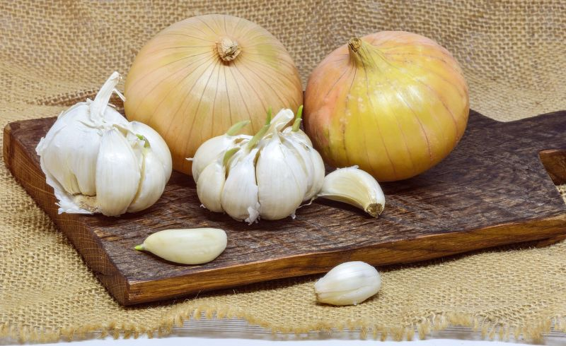 garlic and onions can sicken dogs