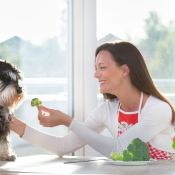 Foods dogs can eat