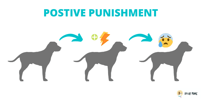 positive punishment dog training