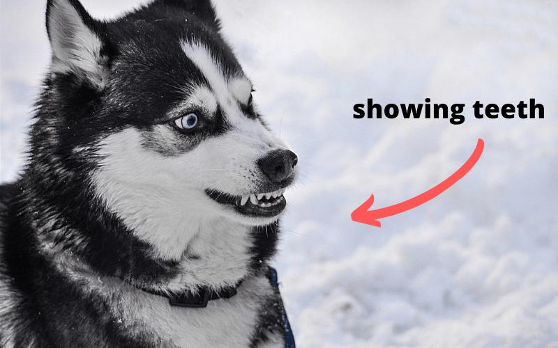 showing teeth