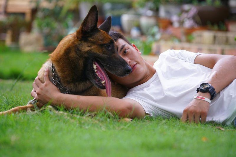 force-free dog training methods