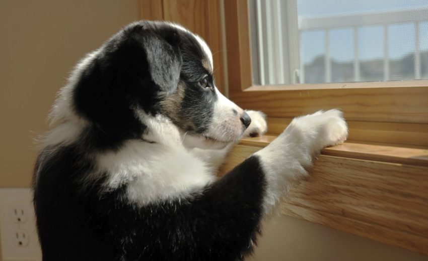 separation stress in dogs