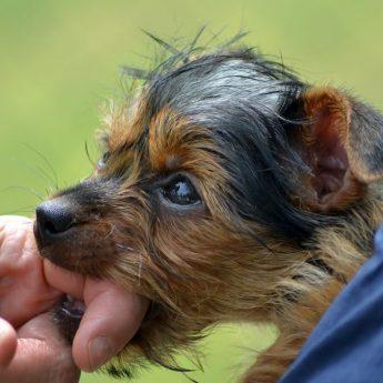 teaching dog not to bite hard