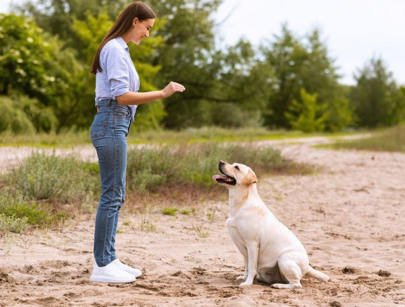 Trainers can help dogs with anxiety