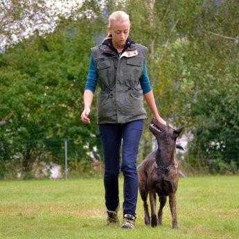 myths about dog training