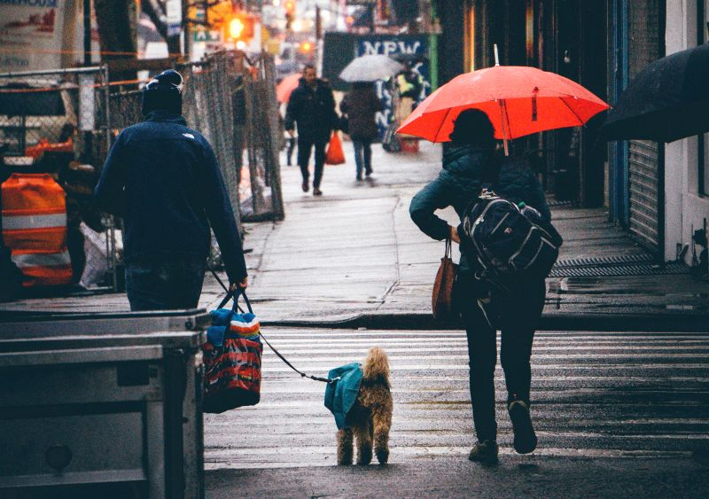 Some dogs hate rain
