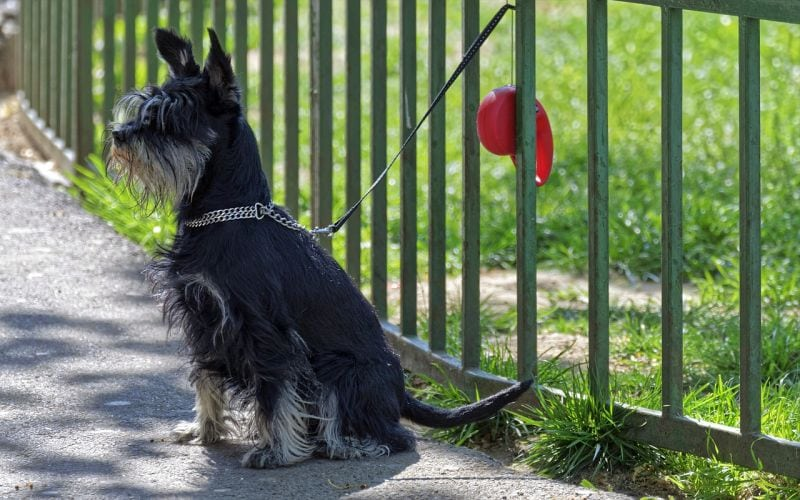 fences can keep dogs out of yard