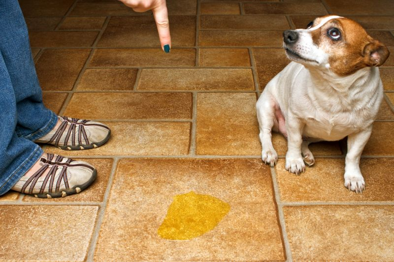 don't scold your dog for accidents