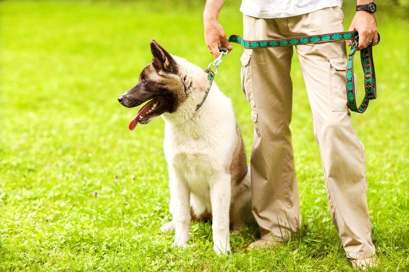 Unique and creative dog leashes