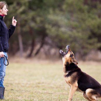 debunking alpha dog myth