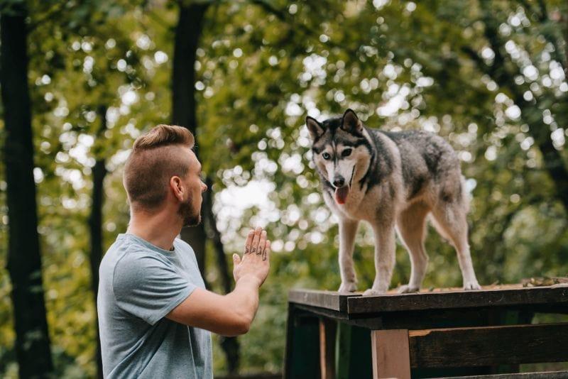 dominance dog training