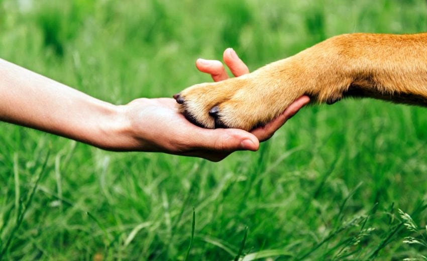 good dog paw balms