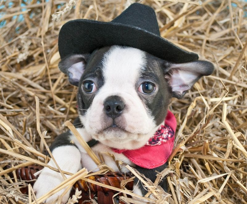 50+ Cowboy names for puppy information