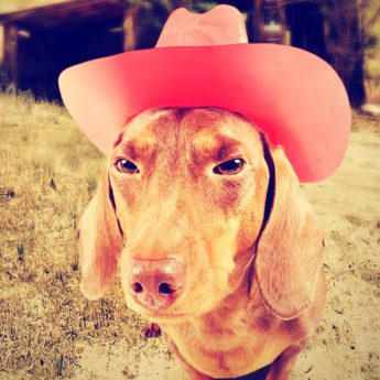 Cowboy Names for Dogs