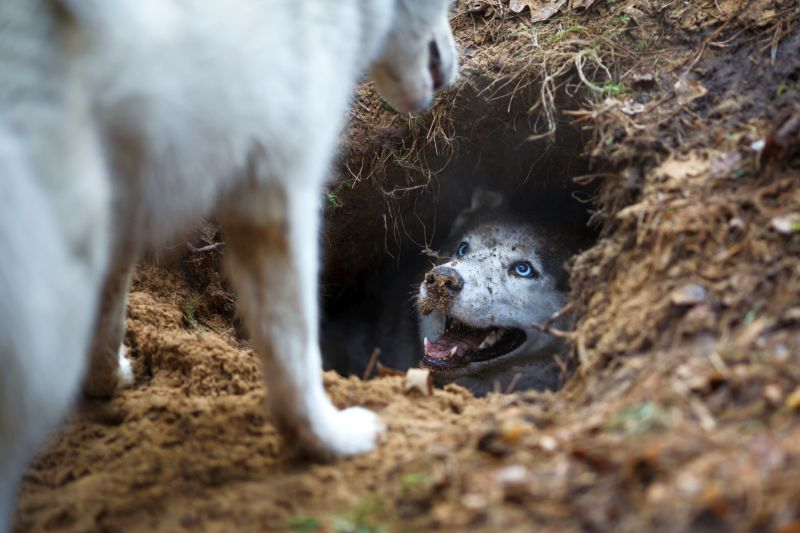 dogs love digging