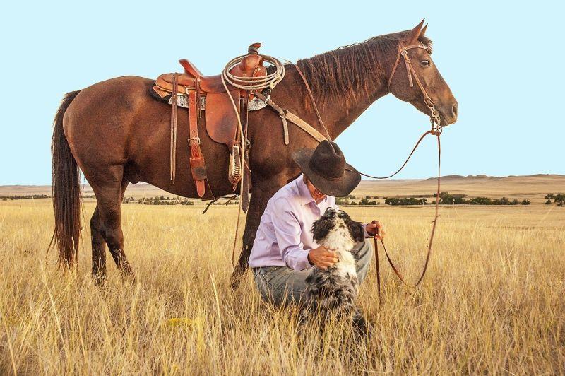dog helping his cowboy dad