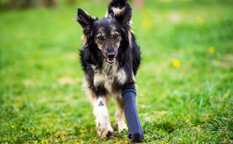 knee braces for dogs