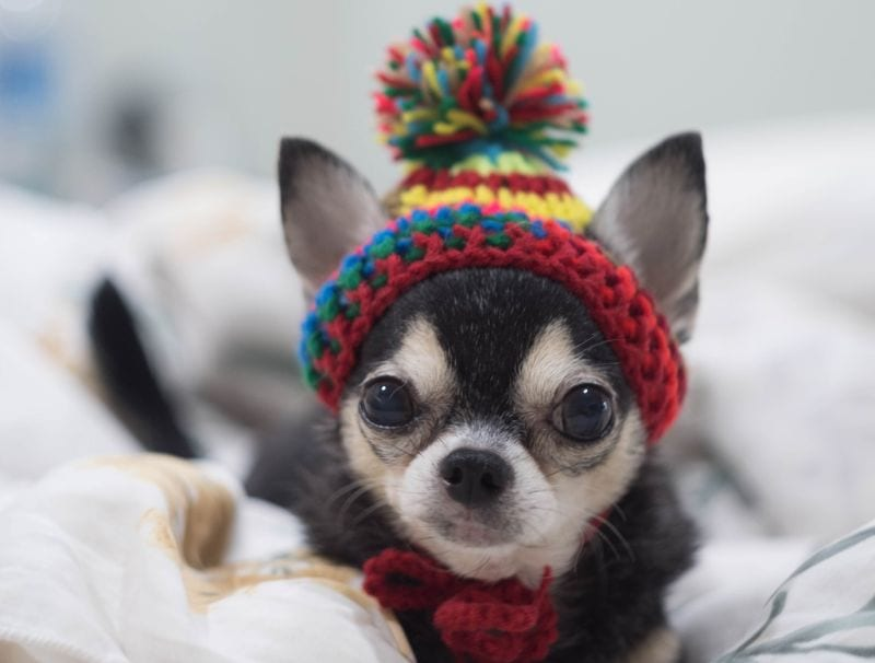 funny names for small dogs