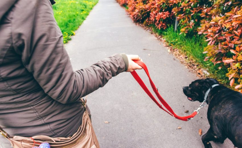 hold your dog's leash correctly