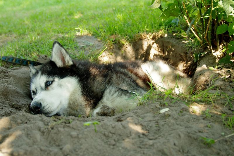 high-energy dogs dig a lot