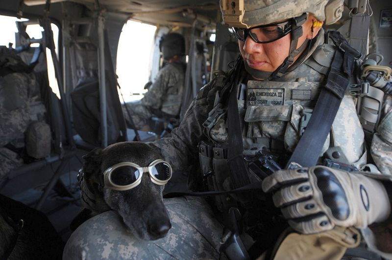 Alpha training for military dogs
