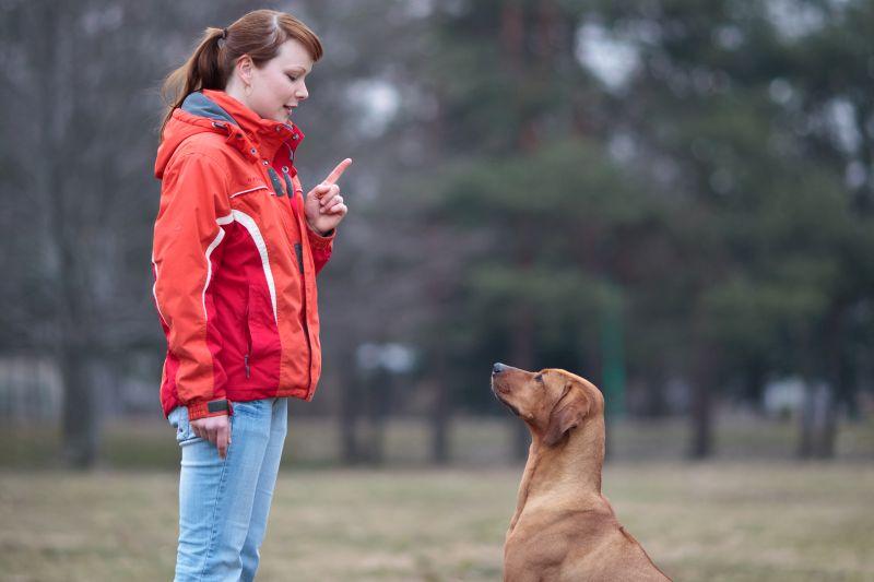 positive-based dog training