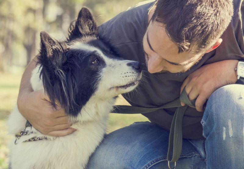 alpha dog alternatives