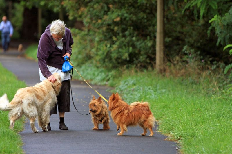 Special considerations for seniors walking dogs