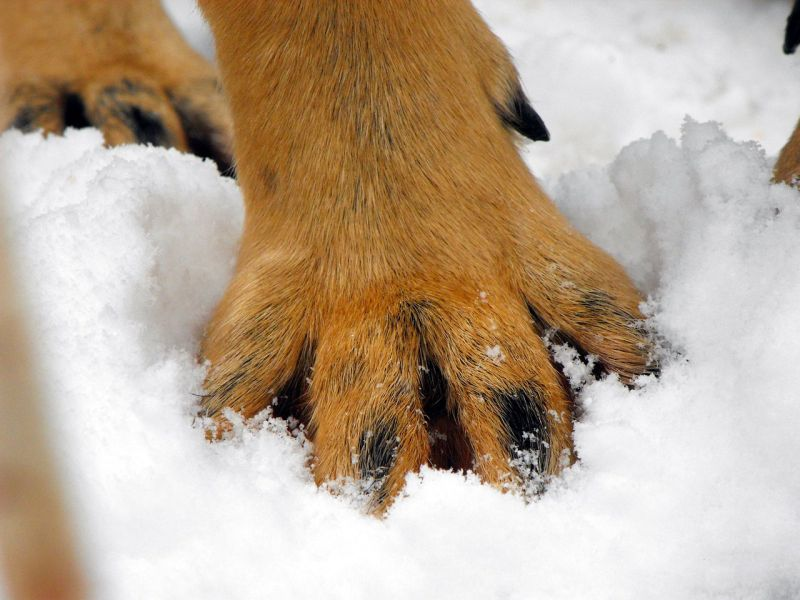 dog paw balm for cold weather