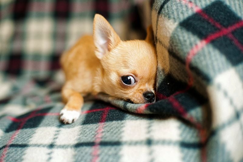 sweet names for tiny dogs