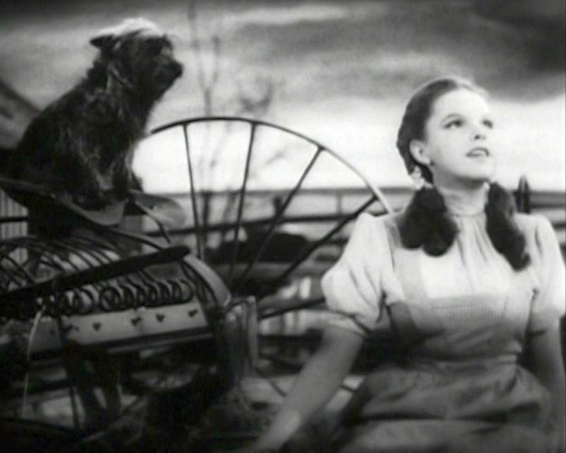 Toto Was Dorothy's Friend