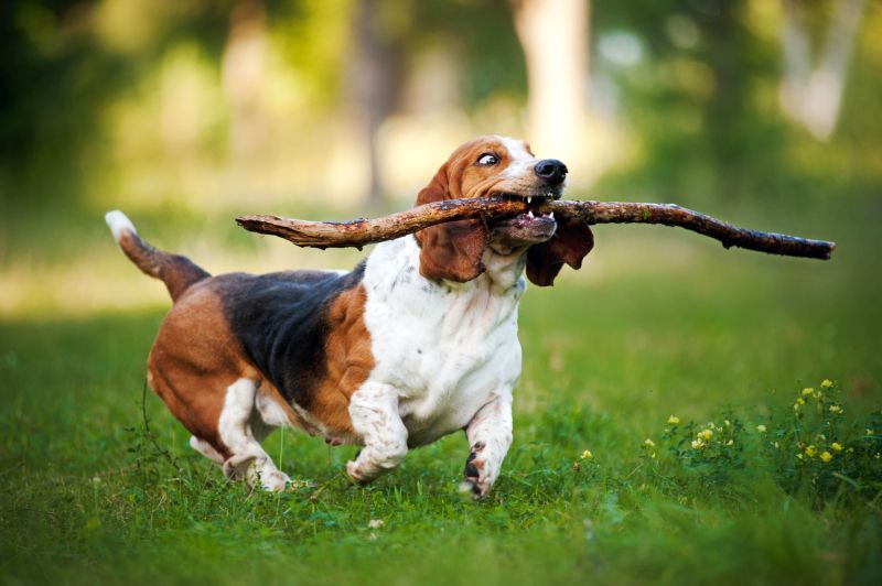 stop your dog from eating sticks