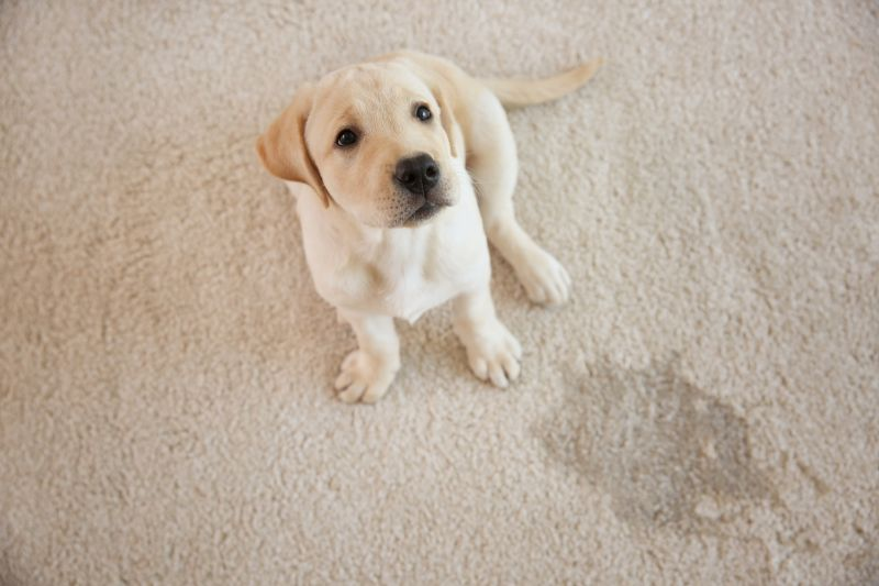 dogs cause odors