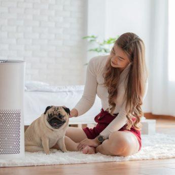 dog air purifier