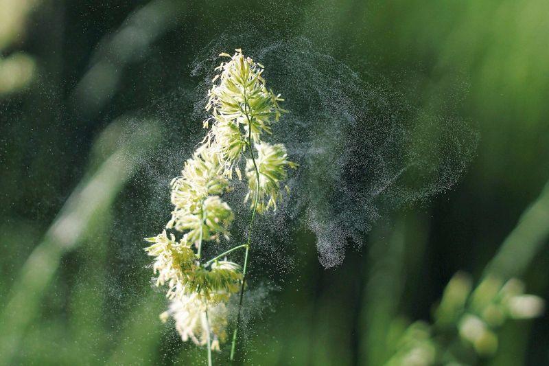 Air purifier for pollen
