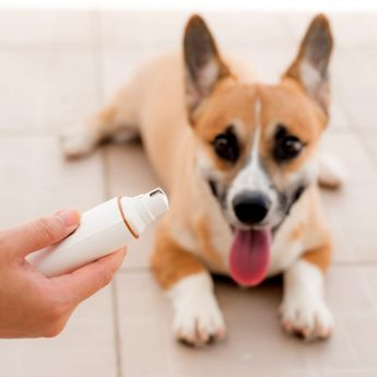 Best Gadgets for Dogs