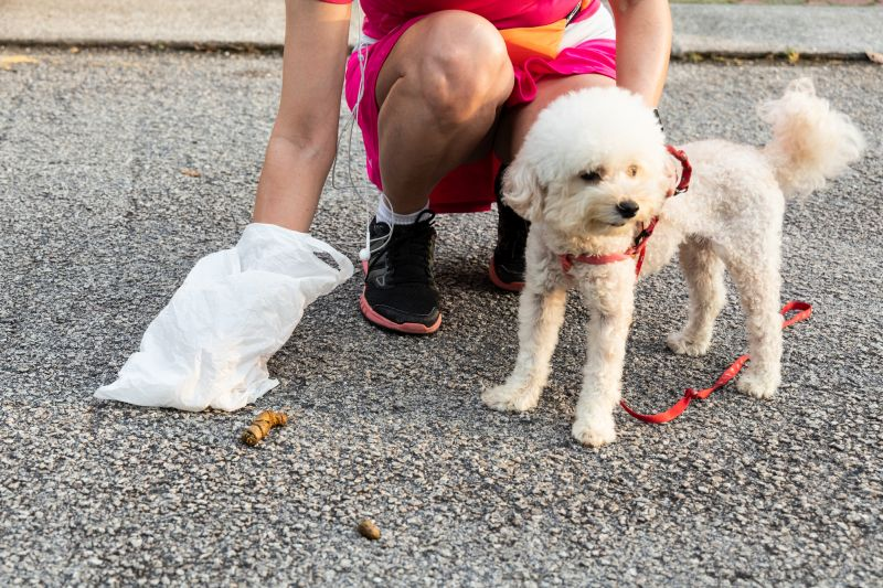 how to collect dog poop for vet