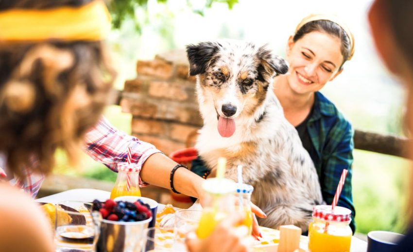 managing dog at dinner party