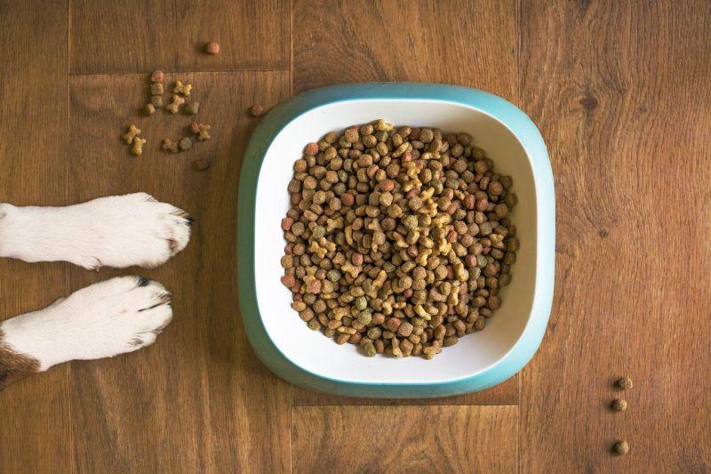 Dog food allergy
